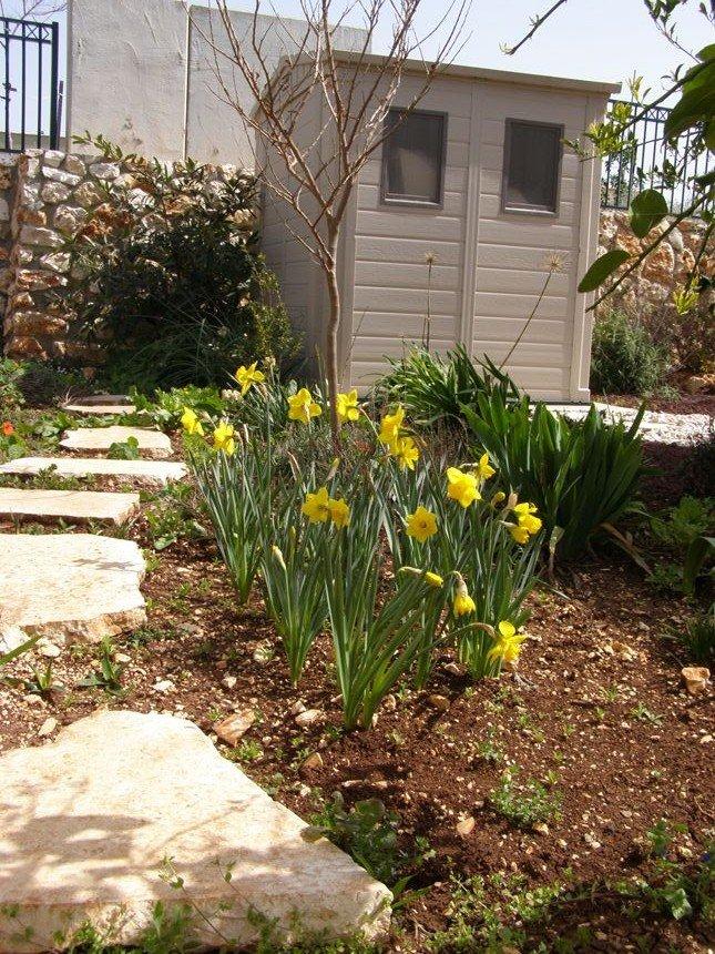 נצפו ברשת – יוני – רעיונות לגינה הביתית