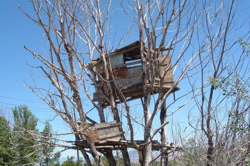 ביתי עץ למבוגרים