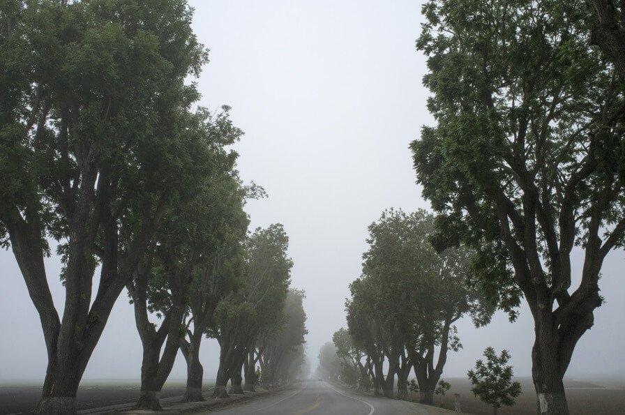 לעצב את העץ: שלושה סגנונות גיזום של עצים (ועוד אחד)